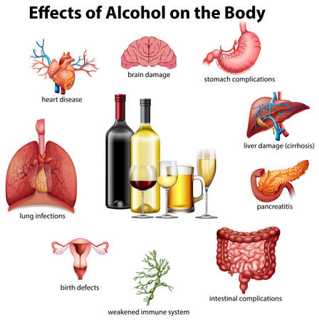 Effects of alcohol on the body illustration Иллюстрация