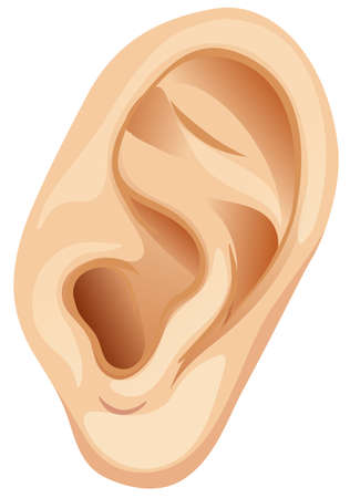 A Human Ear on White Background illustration Stock Illustratie
