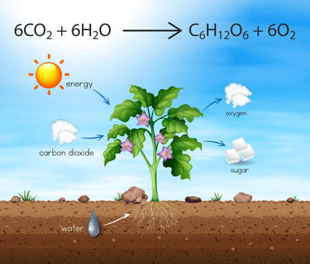 A Process of Tree Produce Oxygen illustration Illustration