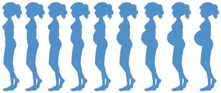 Nine Months of Pregnancy Progression illustration