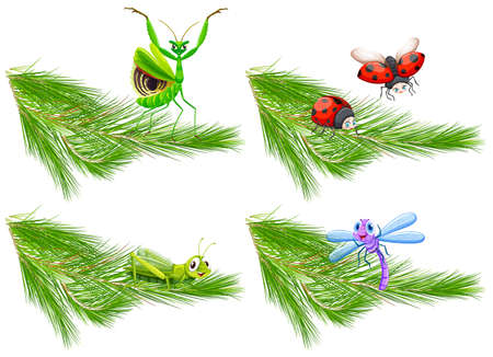 Insect on Pine Tree Branch illustration