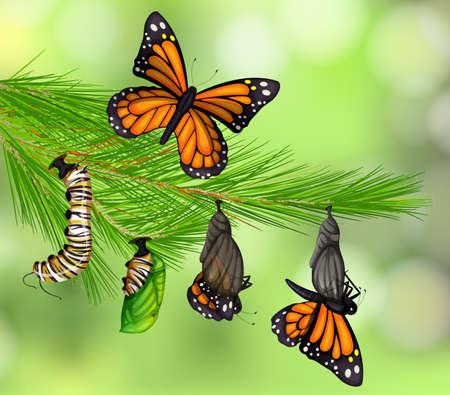 Zestaw ilustracji cyklu życia motyla Ilustracje wektorowe
