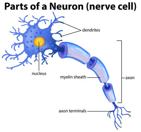 Part of a Neuron Diagram illustration Иллюстрация