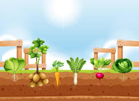 Set of different vegetable crop illustration