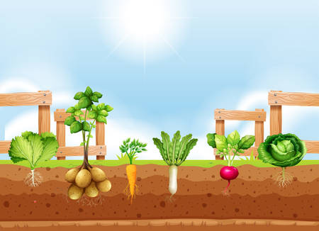 Set of different vegetable crop illustration