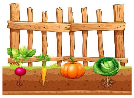 Set of different vegetables illustration