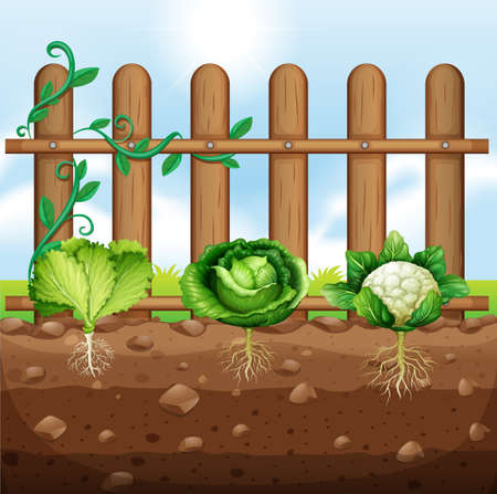 Set of vegetable crops illustration