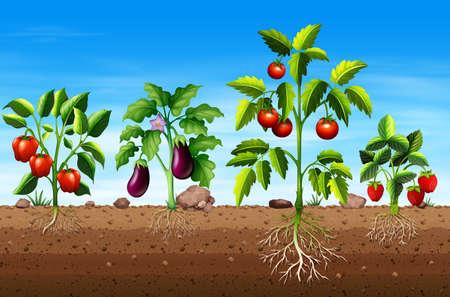 Conjunto de diferentes plantas de frutas y verduras ilustración Ilustración de vector