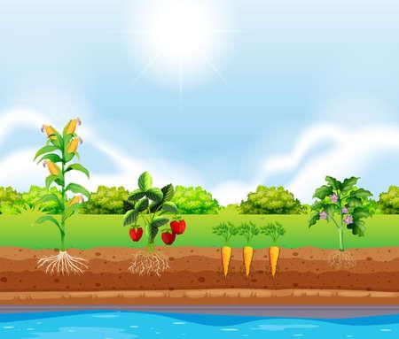 Un conjunto de plantas que crecen ilustración Ilustración de vector