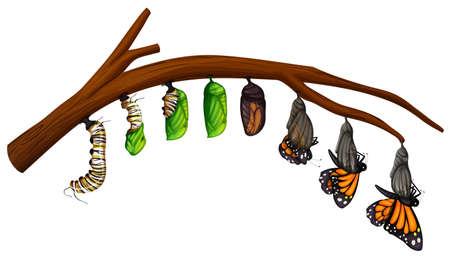 Een set van vlinder levenscyclus illustratie