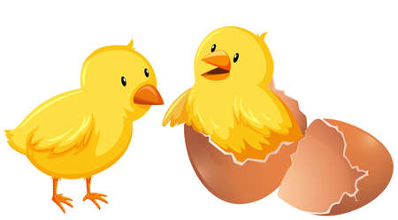 Two young chickens in shell illustration