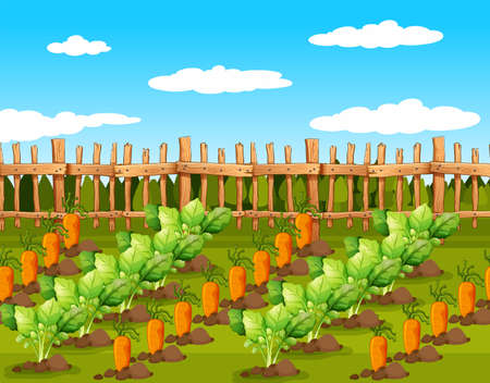 Field of food crops. Vector illustration