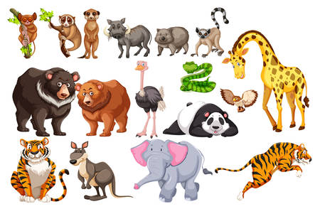A Set of Wild Animals on White Background illustration Illustration