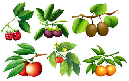 A set of fruit and branch illustration Stock Vector - 105133108