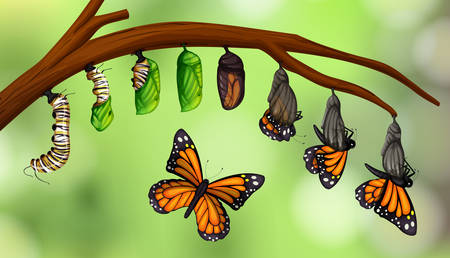 Science butterfly life cycle illustration