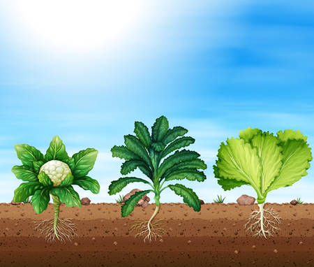 A set of organic plants illustration Illustration