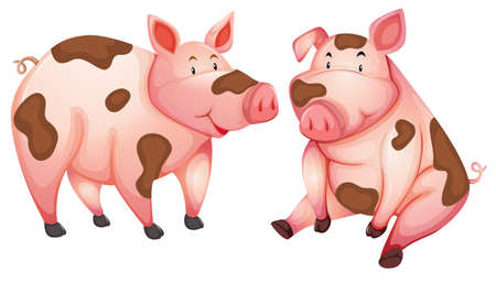 Dirty cute pigs white background illustration