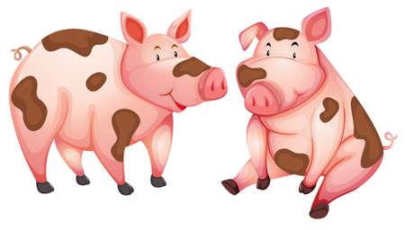 Schmutzige süße Schweine mit weißem Hintergrund