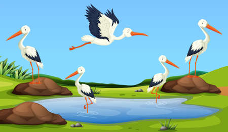 Egret migration to the pond illustration Ilustração
