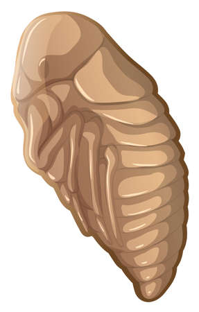 Flea in a cocoon illustration Ilustrace