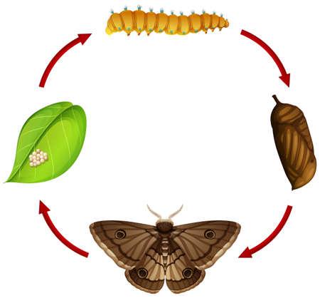Moth life cycle concept illustration Stok Fotoğraf - 108728813