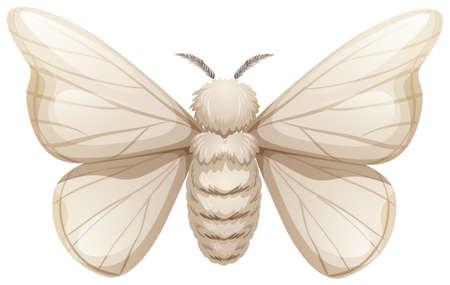 Silkworm on white background illustration