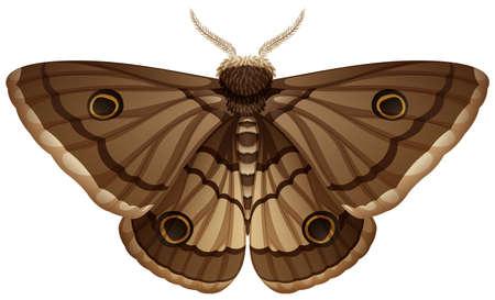 Moth closeup white background illustration