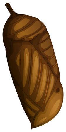 A pupa on white background illustration