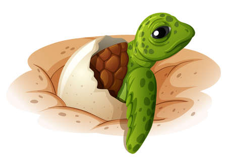 Baby turtle coming out of shell illustration Vectores