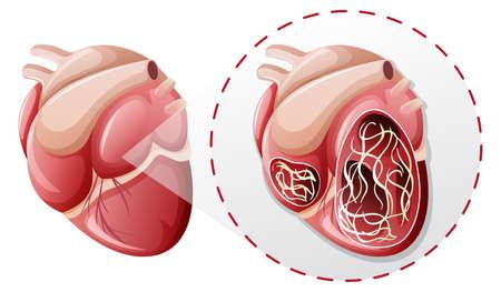 vergrößerte Herzwurmkonzeptillustration