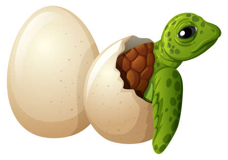 Baby turtle hatchling egg illustration Иллюстрация