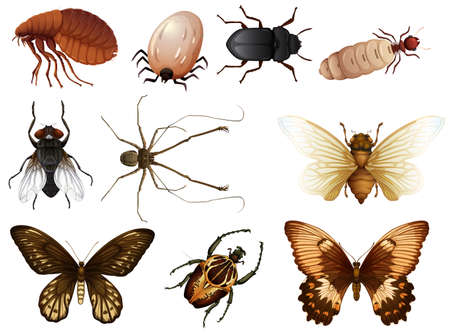 Set of bug and insect illustration