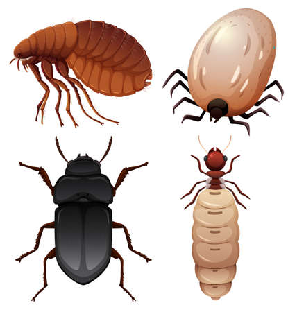 Set of insect on white background illustration