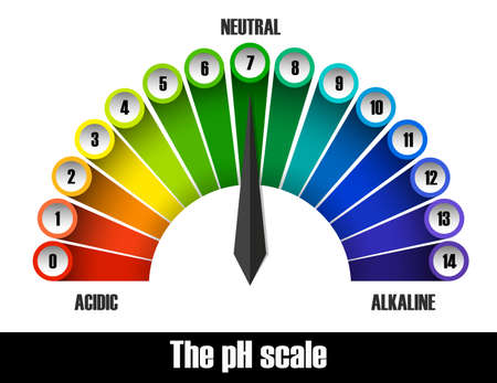 The ph scale chart illustration 向量圖像