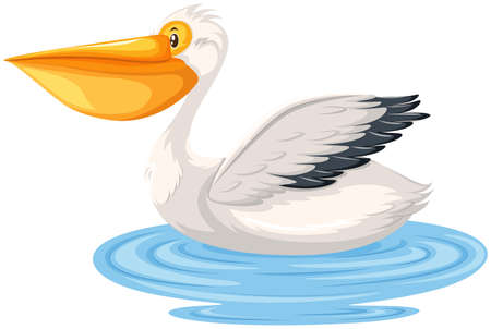 A pelican in the water illustration