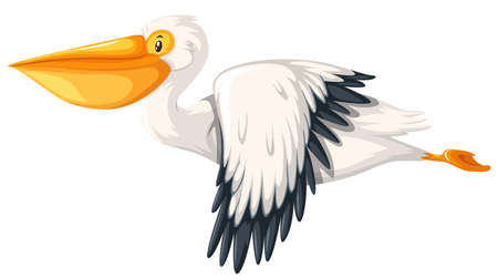 Pelican flying white background illustration