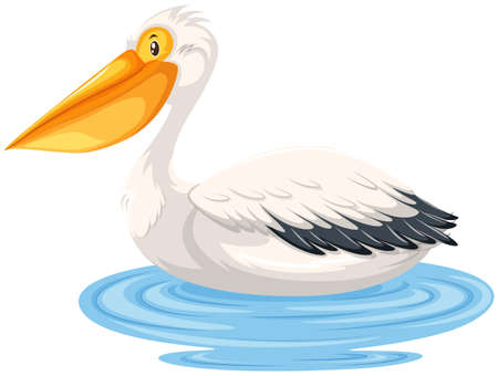 Pelican sitting on water  illustration