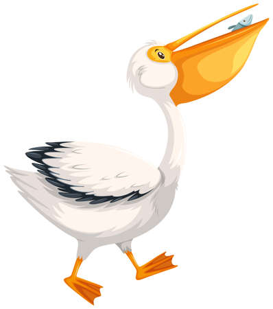 A pelican character on white background illustration