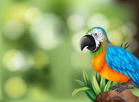 Colorful parrot background scene illustration