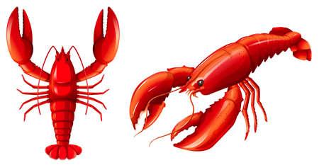 Ensemble d'illustration de homard rouge