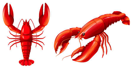Set of red lobster illustration Ilustração