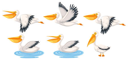 Set of pelican character illustration Banco de Imagens - 127031713