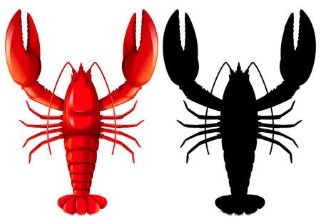 Set of lobster on white background illustration