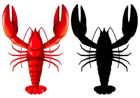 Set of lobster on white background illustration