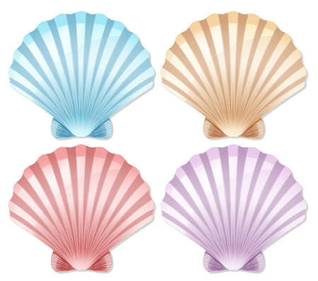Set of color scallop shell illustration 向量圖像