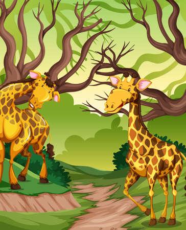 Giraffe in the jungle illustration