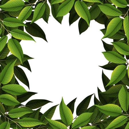A nature leaf border illustration