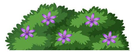 Cespuglio di piante isolato su sfondo bianco illustrazione Vettoriali