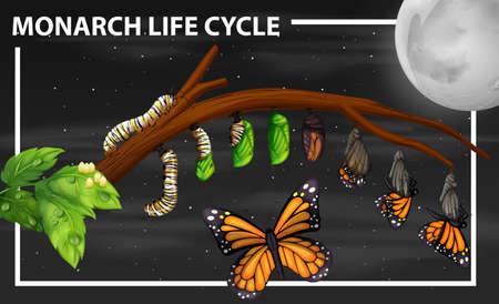 Monarch life cycle diagram illustration Stock Illustratie