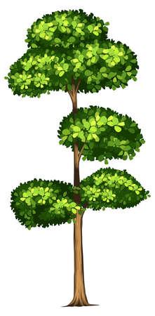 Tall tree white illustration Vettoriali